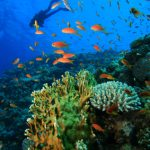 reef and diver iStock_000014071214XSmall