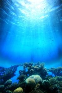 reef with sun iStock_000003969132XSmall